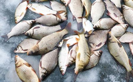 ловит рыбу на месяцев